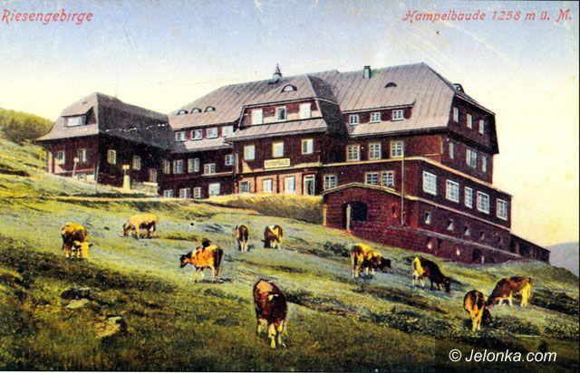Region Jeleniogórski: Krowy wrócą w Karkonosze