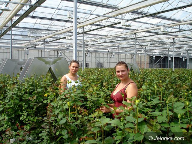 Region Jeleniogórski: Uczyli się pracy za granicą