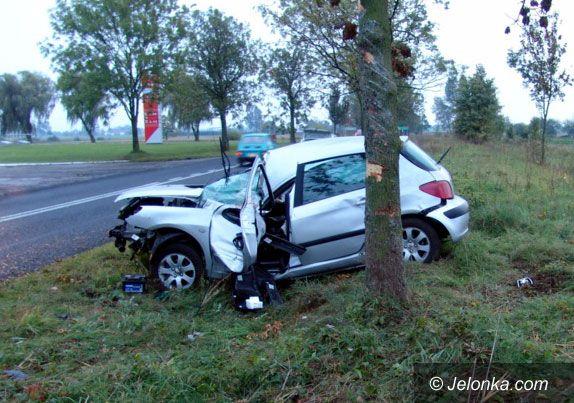 Dolny Śląsk: Masakra piłą mechaniczną przy drogach