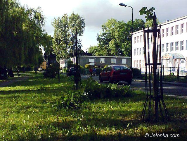 JELENIA GÓRA: Masakra kasztanowców na skwerku