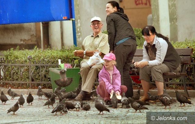 JELENIA GÓRA: Martwy zakaz dokarmiania ptaków