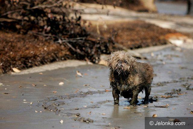 REGION JELENIOGÓRSKI: Wyrok śmierci na psy