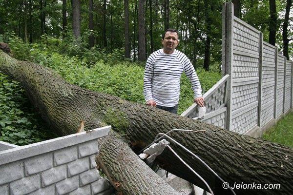 Jelenia Góra: Klon połamał ogrodzenie