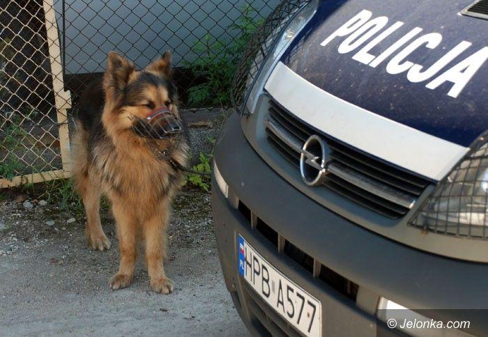 JELENIA GÓRA: Psy niezwykłe, bo służbowe