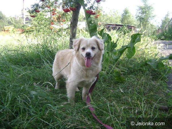 JELENIA GÓRA: Weź na kolana psa