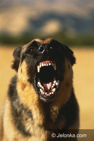 JELENIA GÓRA: Kolejne pogryzienie przez psa