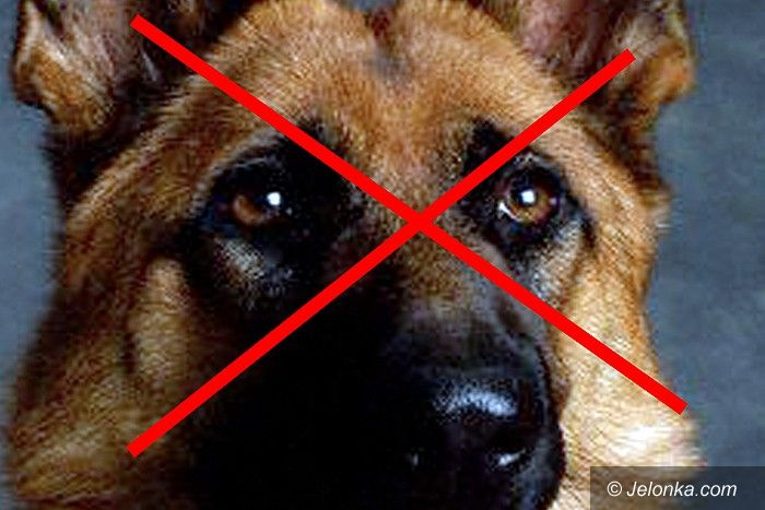 REGION: Na zlecenie uśmiercił siekierą psa