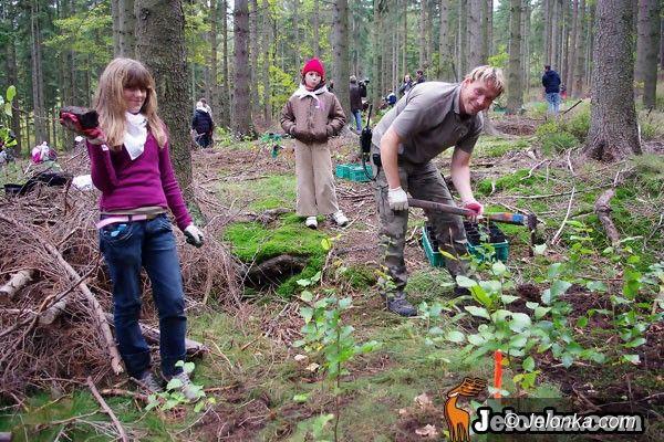 REGION: Nadszedł czas na bukowy las