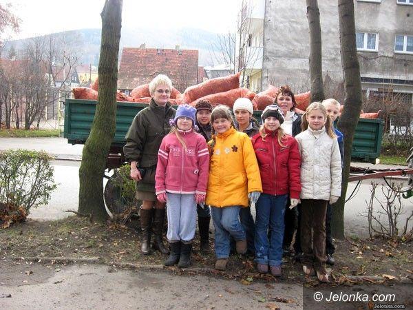 REGION: Bronią drzew przed groźnym pasożytem