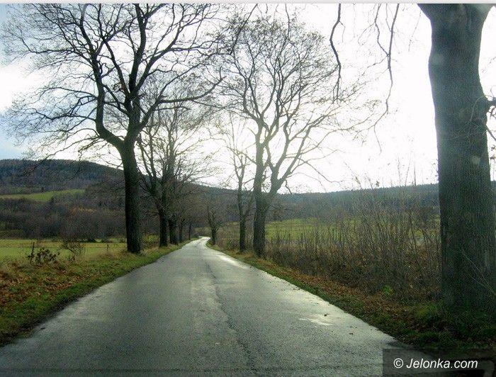 REGION: Ważą się losy przydrożnych drzew