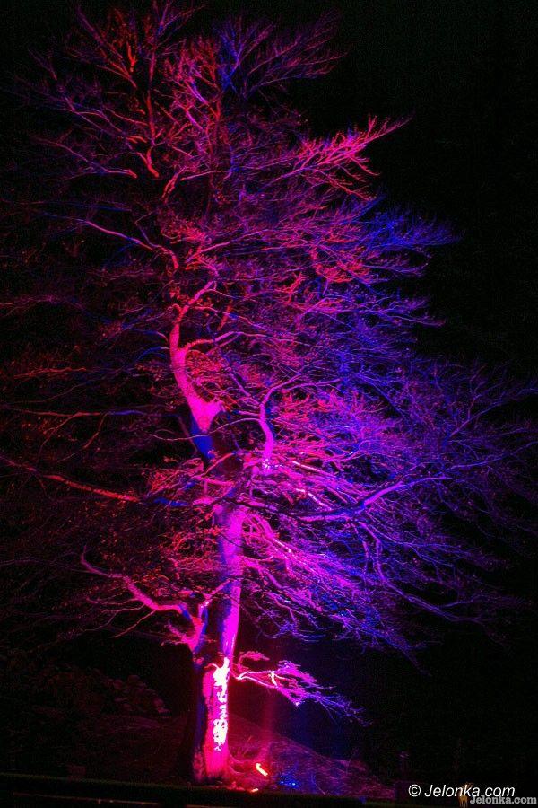 REGION: Czarodziejski zakątek w magicznej iluminacji