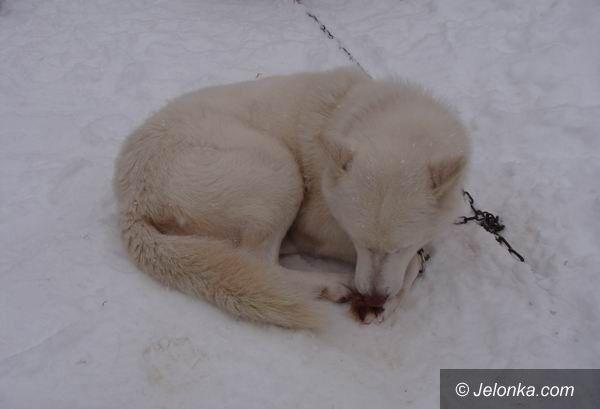 """JAKUSZYCE: Zwierzęta i ludzie w śniegu """"po pachy"""""""