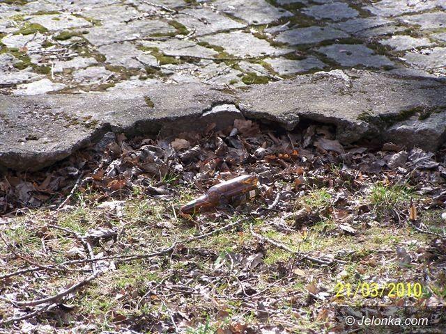 JELENIA GÓRA: Park Zdrojowy wiosną: nędza i rozpacz