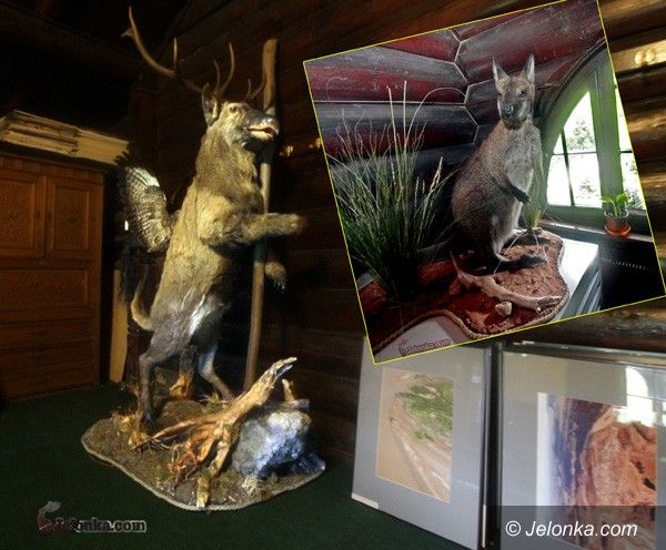 JELENIA GÓRA: Pyton, tygrys, kangur, jeleń