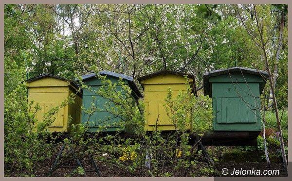 JELENIA GÓRA: Pszczelarskie święto tuż