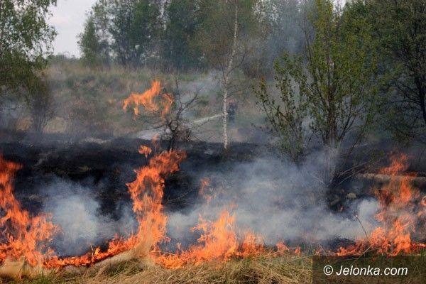 Jelenia Góra: Płonęły nieużytki koło byłej Celwiskozy