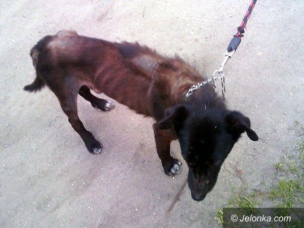 JELENIA GÓRA: Za głodzenie psa grozi kara do dwóch lat więzienia
