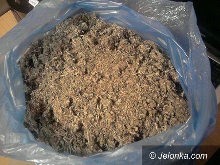 REGION JELENIOGÓRSKI: Przygotowywał ponad 14 tysięcy porcji marihuany do sprzedaży