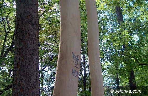 JELENIA GÓRA: Kto zniszczył drzewa w cieplickim parku