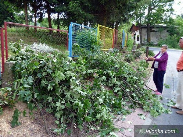JELENIA GÓRA: Sprzątali i… zniszczyli jagniątkowskie rododendrony