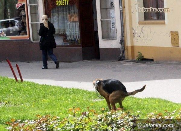 JELENIA GÓRA: Czy na ulice Jeleniej Góry powróci hycel?