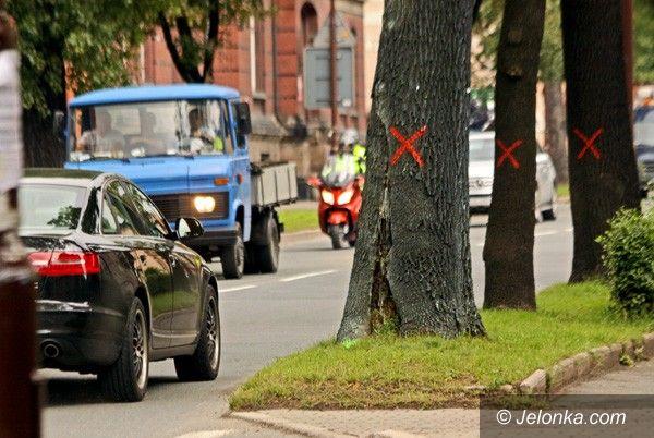 JELENIA GÓRA: Ogołocą al. Wojska Polskiego z drzew. Bo zagrażają bezpieczeństwu