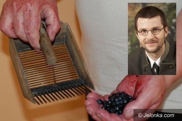 REPUBLIKA CZESKA KARKONOSZE: Polscy zbieracze jagód niszczą przyrodę w Karkonoszach