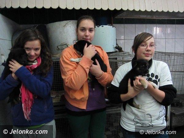JELENIA GÓRA: Do serca przytul psa, weź na kolana kota