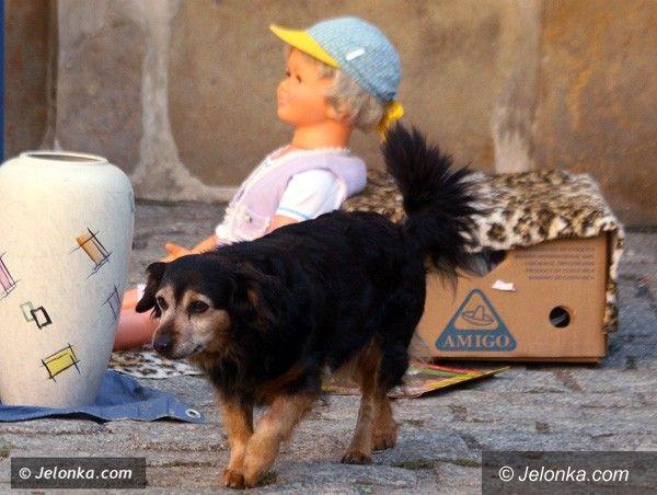 JELENIA GÓRA: Strażnicy dostaną czytniki psich czipów