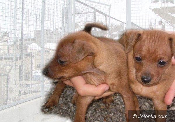 JELENIA GÓRA: Handel zwierzakami (tylko) pod kontrolą?