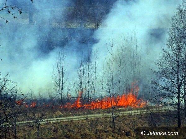REGION JELENIOGÓRSKI: O krok od pożaru lasu na Wzgórzu Krzywoustego