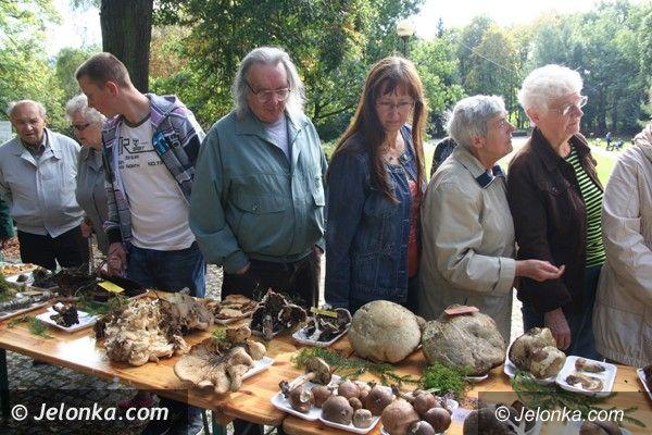 Jelenia Góra - Cieplice: Grzyby pachnące... rzodkiewką i inne okazy na wystawie w Parku Norweskim jeszcze dzisiaj