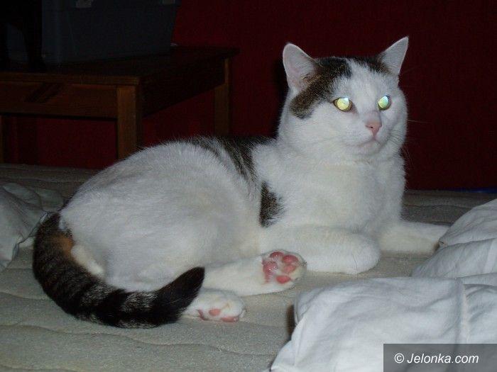 Jelenia Góra: Czy ktoś widział tego kota?