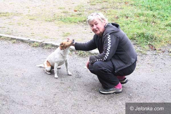 Jelenia Góra: Pies, porzucony na pętli autobusowej, nie zostanie bez pomocy