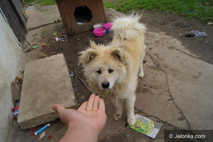 Jelenia Góra/region: Walczą o skrzywdzone zwierzęta