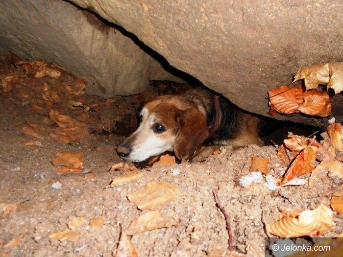 Jelenia Góra: Chory, uwięziony pies kilka dni czekał na pomoc