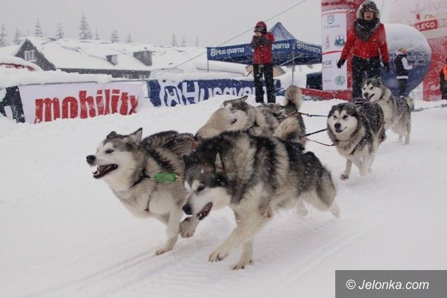 Polana Jakuszycka: Rusza VII Husqvarna Tour 2013 – rekordowe wyścigi psich zaprzęgów!