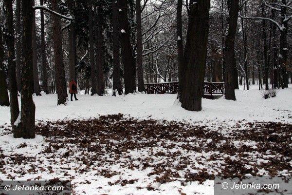 """Jelenia Góra: Dzika zwierzyna """"wpada"""" do Parku Norweskiego na żołędzie. Nie ma na to rady"""