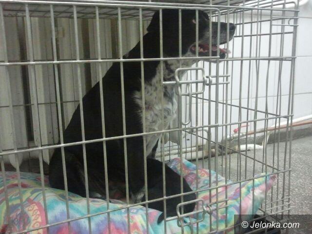 Jelenia Góra: Strażnicy uratowali sukę ze szczeniakiem