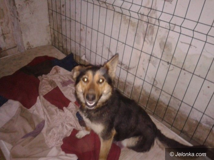 Region: Ten pies został wrzucony do sztolni. Kto go przygarnie?