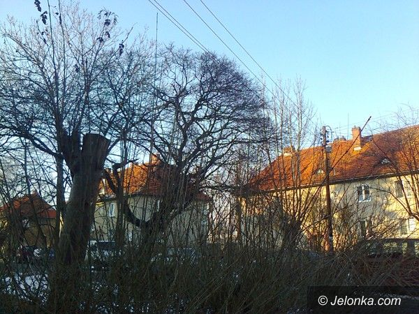Jelenia Góra: Czytelnik: Konary drzew między liniami energetycznymi pod napięciem!