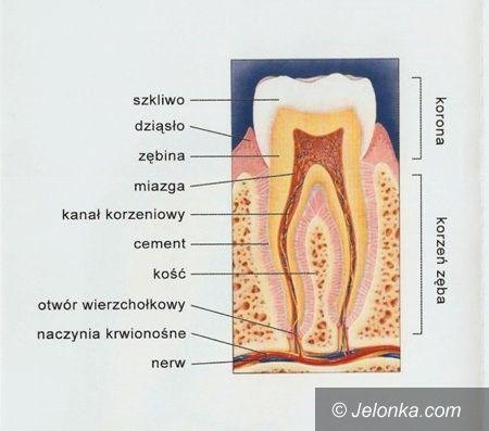 Jelenia Góra: Stomatologia pod narkozą