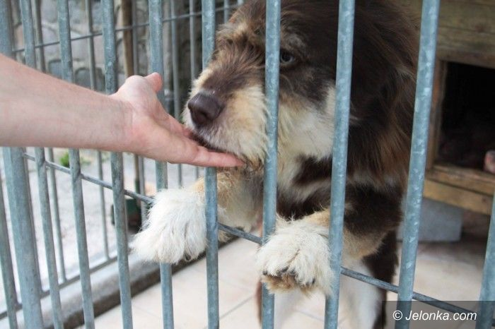 Jelenia Góra/region: Wyrzucają zwierzęta… z powodu urlopu