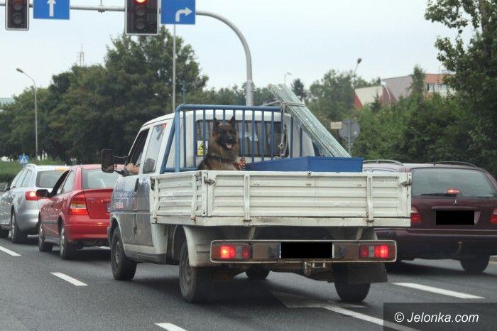 Jelenia Góra: O psie, który jeździł… na przyczepie