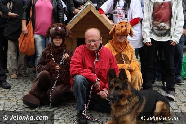 "Jelenia Góra: Akcja na ""Majówce"": Zdejmijmy psom łańcuchy!"