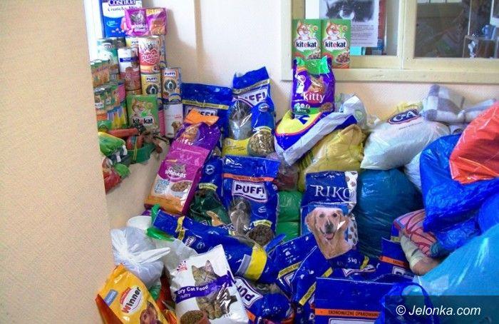 Jelenia Góra: Rusza zbiórka darów dla zwierzaków. Przyłącz się!