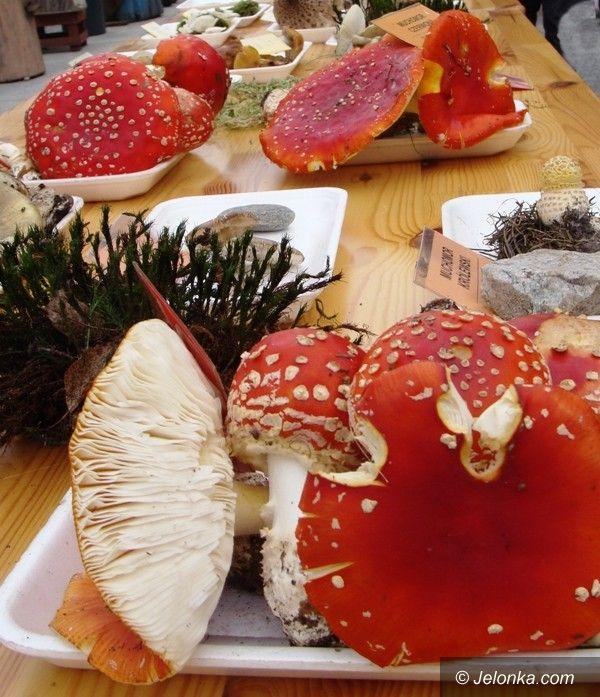 Jelenia Góra: Jaki to grzyb? – o tym na wystawie w Cieplicach