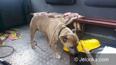 Jelenia Góra: Trzymał psa w ciemnym garażu i bez jedzenia