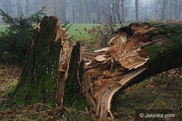 Jelenia Góra: Padają drzewa w Parku Zdrojowym