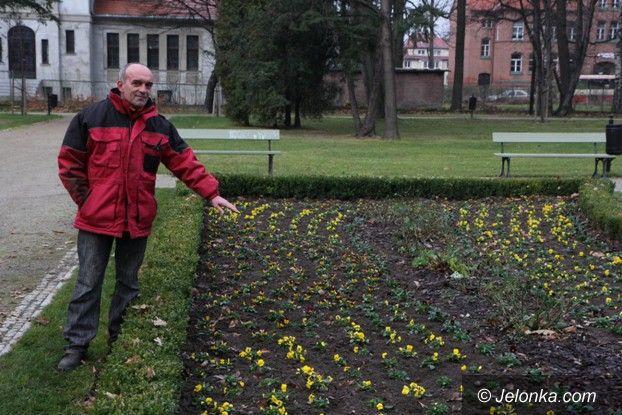 Jelenia Góra: Z Parku Zdrojowego giną rośliny. A jest monitoring!